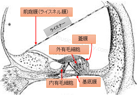蝸牛の役割